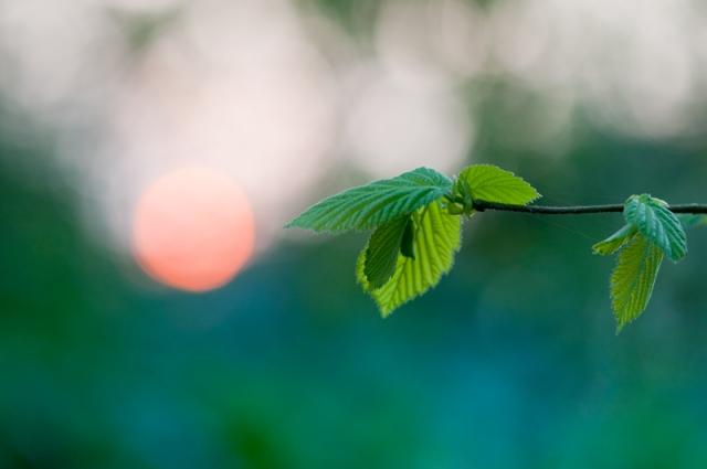 Zonsondergang bos bladeren bokeh