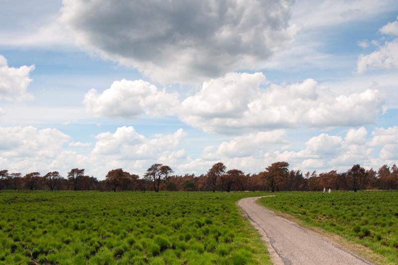 Nationaal Park De Hoge Veluwe Gelderland