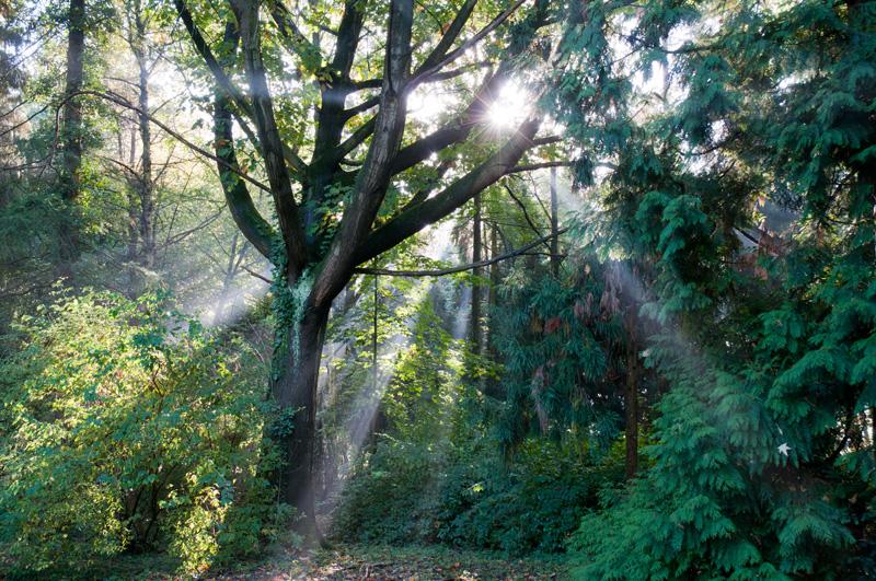Gimbornhof Zevenaar lichtstralen door de bomen