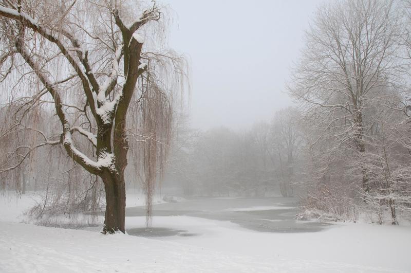 Park Zevenaar - mistige winterochtend sneeuw