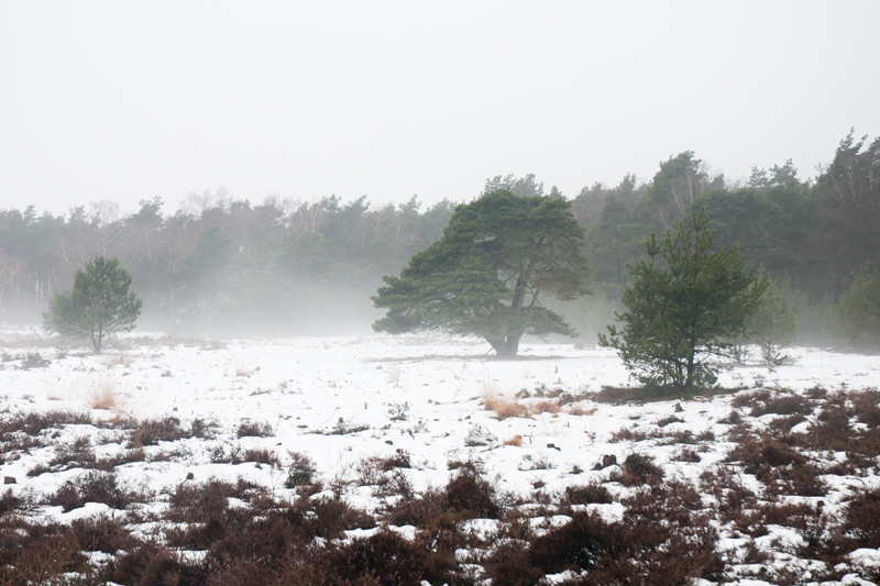 De Posbank Rhenen - Winter sneeuw bomen